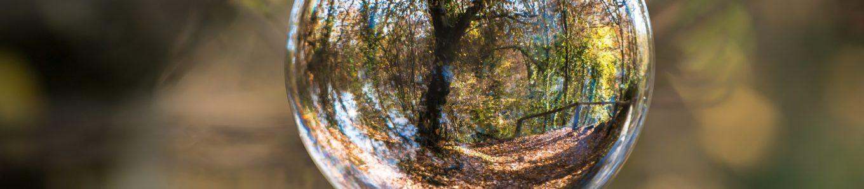Baum fotografiert durch eine Kugel